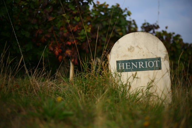 Champagne Henriot