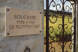 Bouchard own an impressive amount of the 1er and Grand cru sites in Burgundy