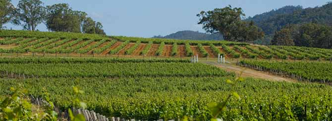 The vineyards of the Hunter Valley