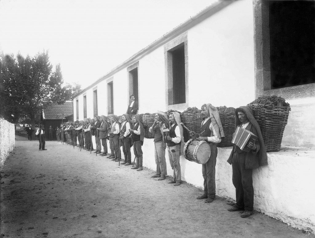 Pickers at Quinta do Bomfim in 1900