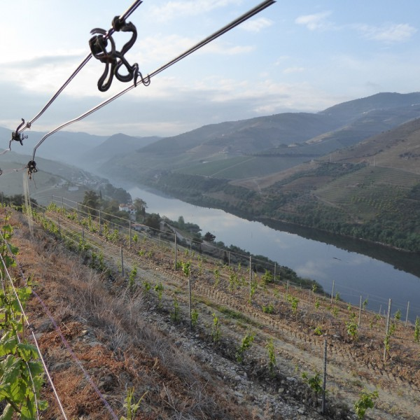 An early morning run above the Douro.