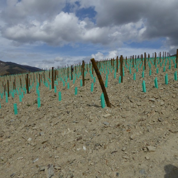 The vertical planting at Quinta da Roeda