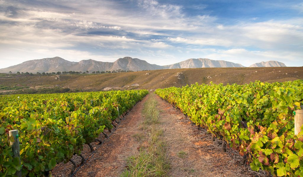 Extreme beauty at the Bouchard Finlayson Estate in South Africa