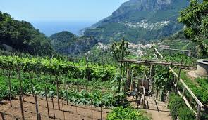 The extremities of Greco vineyards in Campania