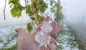 Hail at a critical time for berries in Chablis