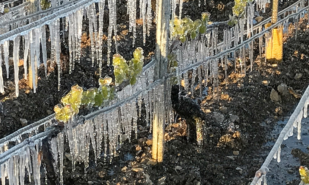 This image from Wine Spectator shows the devastating frosts