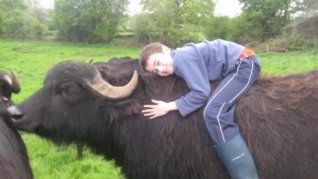 The buffalo at Toonsbridge