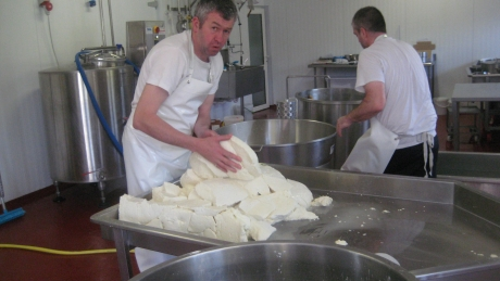 Making the cheeses in situ at Toonsbridge