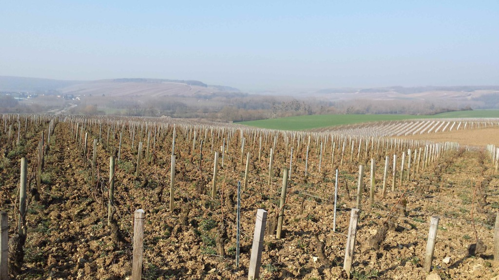 The Grand Cru Vineyards of Chablis lying in wait.