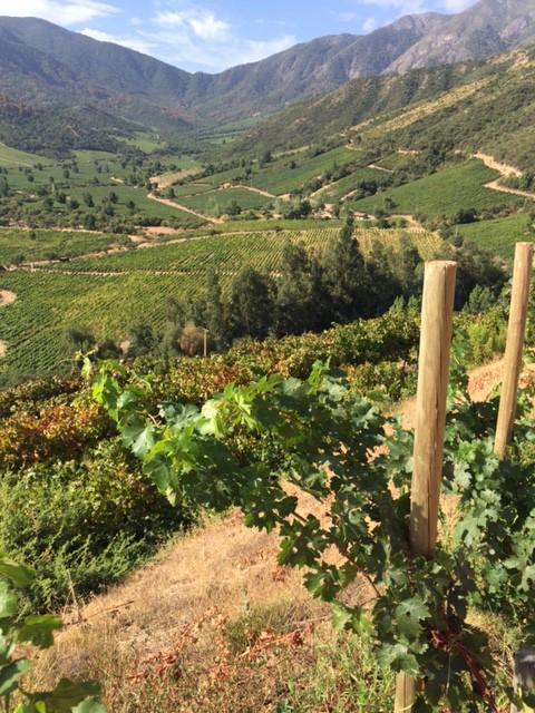 Alpalta Vineyards